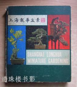 上海龙华盆景