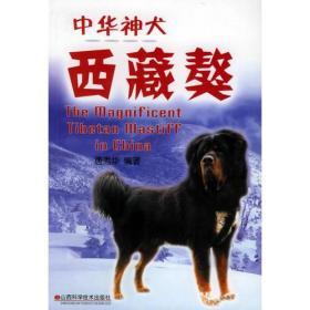 中华神犬——西藏獒