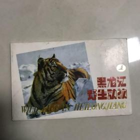 黑龙江野生动物1套10枚明信片