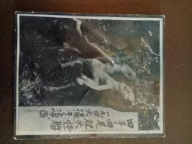 1946年摄于滇西《四手四足双头怪胎》