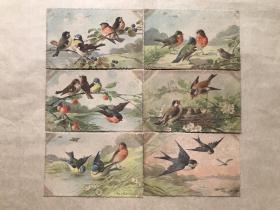 五十年代瑞士彩色明信片:花鸟图案6张一组(绘画版),M026