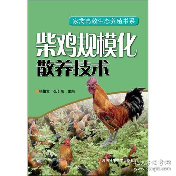 柴鸡规模化散养技术