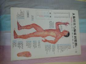 人体经穴与病症对照图正侧背位三张挂图附代手足部挂图及视力表六张