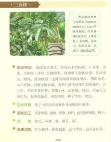 实用土家族药物 杨德胜 中国医药科技出版社 9787506785525