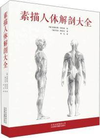 素描人体解剖大全