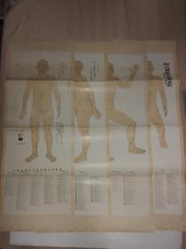 重绘人体经穴图(一套四张全)