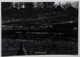 《牧》上世纪90年代初艺术摄影原版胶片老照片詹小明摄