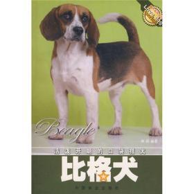 活泼开朗的口袋猎犬:比格犬