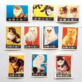 火花贴标:猫(10枚)涪陵火柴
