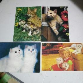 可爱的猫咪明信片四张。