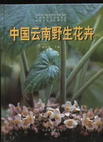 中国云南野生花卉