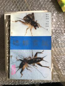 蟋蟀赏玩 B3