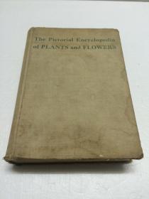 The Pictorial Encyclopedia of PLANTS and FLOWERS【圖說植物和花的百科全書  一千多幅圖片  圖文并茂 】