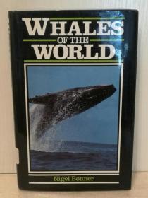 世界鲸鱼 研究 Whales of the World by Nigel Bonner (自然地理)英文原版书
