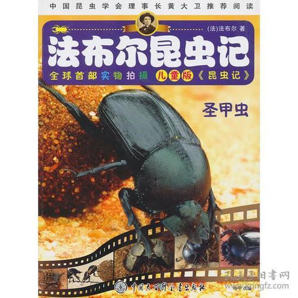 圣甲虫(儿童版)/法布尔昆虫记