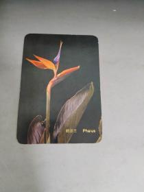 鹤顶兰 Phaius  书签 卡片 图片 背面是1977年日历 9.8x6.8cm