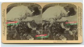 清末民国立体照片------1896年小女孩和她的宠物小猫咪都睡着了,虎斑猫