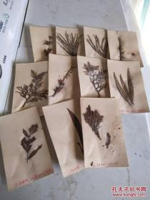 60年代年植物标本【11张】
