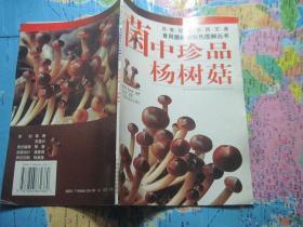 菌中珍品杨树菇.