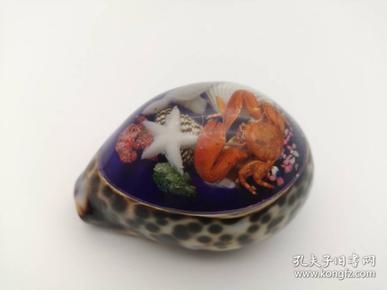 海洋琥珀贝壳标本