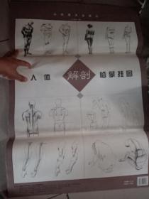 人体解剖临摹挂图