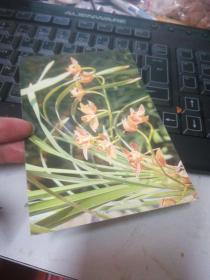 兰花明信片一张