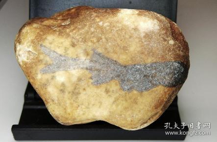 狼鳍鱼艺术化石
