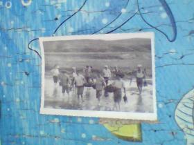 老照片;70年代一群下水田的人
