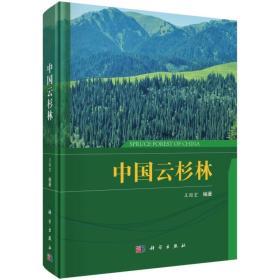 中国云杉林