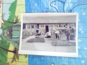 老照片;支农在农家院干活