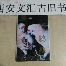 鹦鹉明信片10张