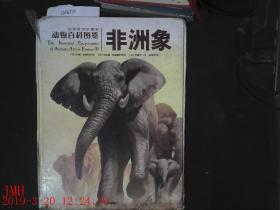 非洲象  有点破损