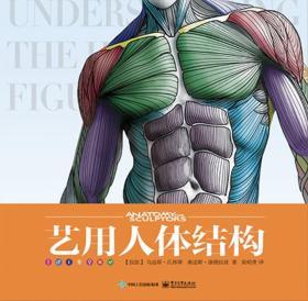 艺用人体结构