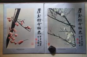 1980年代历史博物馆套装(49*39CM):张大千    摩耶精舍梅花    第一、二辑24张   合售