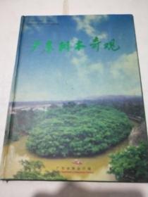 广东树木奇观