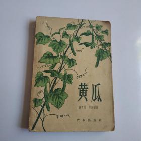 黄瓜--蒋各川1958年