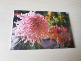 菊花明信片