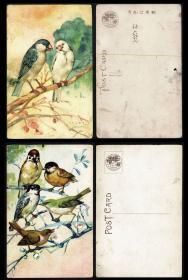 伪满洲国鸟和花卉明信片 5枚