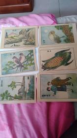 50年代识字卡片24张同售