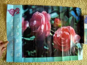 山茶花----1992