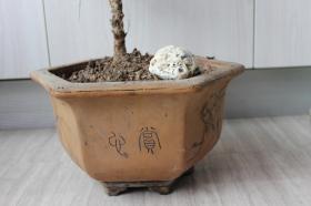早期紫砂盆——六角盆