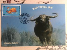 1997香港牛年生肖邮票极限明信片两套8枚合拍(精美邮票+世界自然基金会发行生肖牛年明信片)极佳片