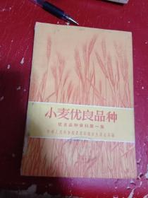 小麦优良品种