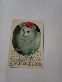 1982年年历卡:小猫