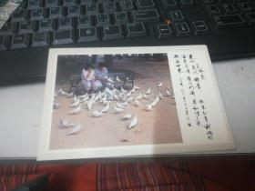 明信片-&依恋&一张