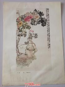 吴俊卿(昌硕?):牡丹(1904年作)(册页26*35cm)折叠寄送