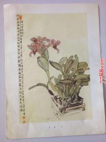 徐悲鸿:紫兰(册页26*35cm)折叠寄送