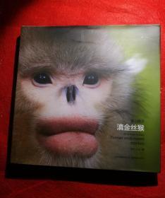 雪山精灵:滇金丝猴