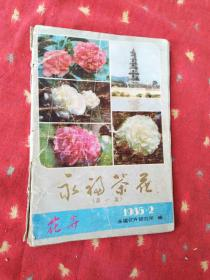 永福茶花第一集1985