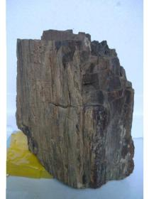 新疆硅化木(或者木变玉)